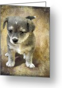 Brown Dogs Digital Art Greeting Cards - Grey Puppy Greeting Card by Svetlana Sewell