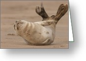 Raf Photo Greeting Cards - Grey Seal Pup Greeting Card by Andy Astbury