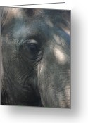 Elephant Pyrography Greeting Cards - Grey Greeting Card by Stephanie Hopkins