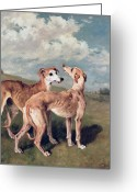Working Dogs Greeting Cards - Greyhounds Greeting Card by John Emms