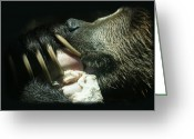 American Brown Bear Greeting Cards - Grizzly Eating Greeting Card by Ernie Echols