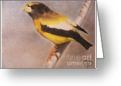 Fantasy Bird Pastels Greeting Cards - Grossbeak Greeting Card by Crispin  Delgado