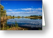 Reeds Reflections Greeting Cards - Ground Level Greeting Card by Robert Bales