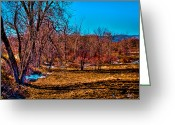Flood Plain Greeting Cards - Grove of Trees Greeting Card by David Patterson