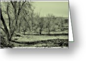 Flood Plain Greeting Cards - Grove of Trees II Greeting Card by David Patterson
