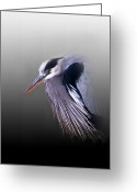 Nature And Wildlife Greeting Cards - Grumpy Ole Man Greeting Card by Skip Willits