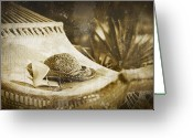 Sandals Greeting Cards - Grunge photo of hammock and book Greeting Card by Sandra Cunningham