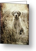 Black And White Greeting Cards - Grunge Puppy Greeting Card by Meirion Matthias