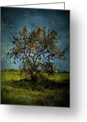 Rural Decay Prints Greeting Cards - Grungy Fall Tree Greeting Card by Larysa Luciw