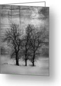 Winter Trees Photo Greeting Cards - Grungy Trees Greeting Card by Larysa Luciw