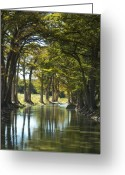 Texas Hill Country Greeting Cards - Guadalupe Cypress Greeting Card by Robert Anschutz