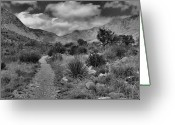 "\""guadalupe National Park\\\"" Greeting Cards - Guadalupe Mountains Morning Greeting Card by Stephen  Vecchiotti"
