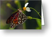 Side View Greeting Cards - Gulf Fritillary Greeting Card by Melanie Viola