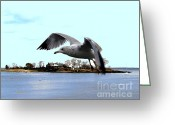 Seabirds Digital Art Greeting Cards - Gull in Flight Greeting Card by Dale   Ford