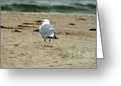 Bayview Greeting Cards - Gull Greeting Card by Louis Sarkas