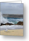 Sennen Greeting Cards - Gull on the sand Greeting Card by Linsey Williams