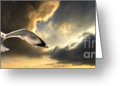 Seagull Photo Greeting Cards - Gull With Approaching Storm Greeting Card by Meirion Matthias