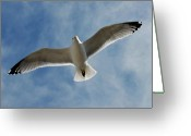 Great Egret Greeting Cards Greeting Cards - Gulls 143 Greeting Card by Joyce StJames