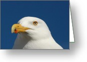 Great Egret Greeting Cards Greeting Cards - Gulls 144 Greeting Card by Joyce StJames