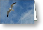 Great Egret Greeting Cards Greeting Cards - Gulls 146 Greeting Card by Joyce StJames