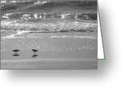 Connecticut Greeting Cards - Gulls Taking a Walk Greeting Card by Cindy Lee Longhini