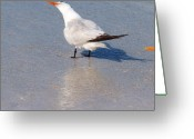Tern Greeting Cards - Gulp Greeting Card by E Luiza Picciano