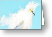 Egret Digital Art Greeting Cards - Hair Stylist Greeting Card by Fraida Gutovich