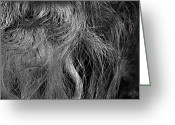 Edmonton Greeting Cards Posters Greeting Cards - Hairlip Greeting Card by Jerry Cordeiro