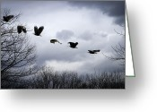 Feathers Greeting Cards - Half second of flight Greeting Card by Bob Orsillo