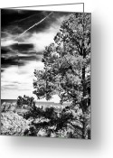 Wonders Of Nature Greeting Cards - Half Tree Greeting Card by John Rizzuto