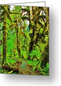 Olympic National Park Greeting Cards - Hall of Moss Greeting Card by Benjamin Yeager