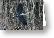 Birds Greeting Cards - Hallelujah Greeting Card by Neal  Eslinger