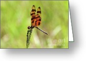 Pennant Greeting Cards - Halloween Pennant Greeting Card by Al Powell Photography USA
