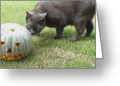 Petstagram Greeting Cards - Halloween Penny 🐱 Greeting Card by Cameron Bentley