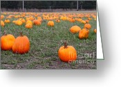 Trick Or Treat Greeting Cards - Halloween Pumpkin Patch 7D8383 Greeting Card by Wingsdomain Art and Photography