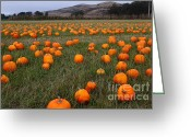 Pumpkin Farm Greeting Cards - Halloween Pumpkin Patch 7D8388 Greeting Card by Wingsdomain Art and Photography