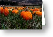 Pumpkin Farm Greeting Cards - Halloween Pumpkin Patch 7D8405 Greeting Card by Wingsdomain Art and Photography