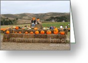Scarecrow Greeting Cards - Halloween Pumpkin Patch 7D8478 Greeting Card by Wingsdomain Art and Photography