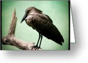 Exotic Bird Greeting Cards - Hamerkop Greeting Card by Gary Heller