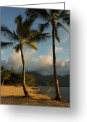 Hanalei Beach Greeting Cards - Hammock Between Palms Greeting Card by Stephen  Vecchiotti