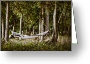 Trees Photograph Greeting Cards - Hammock Heaven Greeting Card by Scott Norris