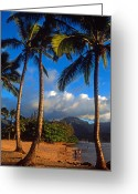 Trees Framed Prints Greeting Cards - Hanalei Bay Palms Greeting Card by Kathy Yates