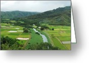 Hawaiian Food Greeting Cards - Hanalei Taro Fields Greeting Card by Michael Peychich