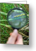 Human Hand Greeting Cards - Hand with magnifying glass looking at a worm on grass Greeting Card by Sami Sarkis