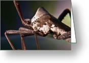 Brown Leaf Greeting Cards - Handsome Bug Greeting Card by Douglas Barnett