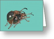 Beetles Greeting Cards - Handsome Fungus Beetles Greeting Card by Jude Labuszewski