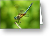 Oklahoma Greeting Cards - Handstand Dragonfly Greeting Card by Karen M Scovill