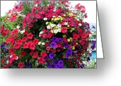 Kamloops Greeting Cards - Hanging Basket Greeting Card by Will Borden
