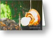 Shed Greeting Cards - Hanging by a Web Greeting Card by Cheryl Young
