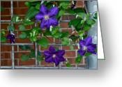 Corsage Greeting Cards - Hanging Garden Greeting Card by Robert Harmon